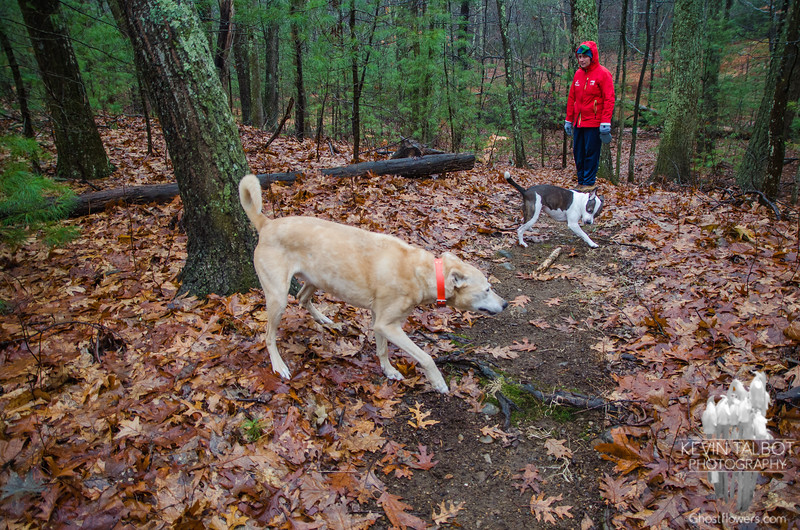 Walking Zoey and Ruby this morning in the rain… December 23, 2014.