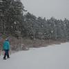 Cedar Swamp in Webster Wildlife Preserve… January 18, 2014.