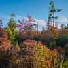Late afternoon in the bog… September 24, 2014.