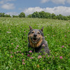 Blue at Battis Farm today… July 28, 2014
