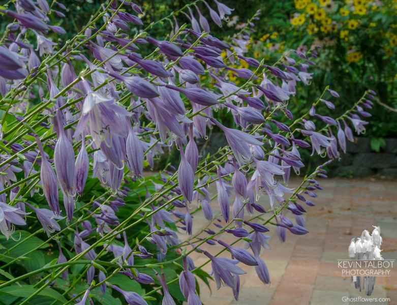 Today in our garden-Summer is still going strong… September 10, 2014.