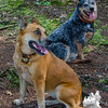 Koko and Blue's awesome day at Kevin and Judy's… September 20, 2014.