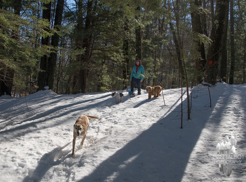In the woods with dogs… February 22, 2014.