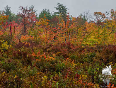 I got quite wet visiting this nearby bog today, but I think it was worth it… September 30, 2015.