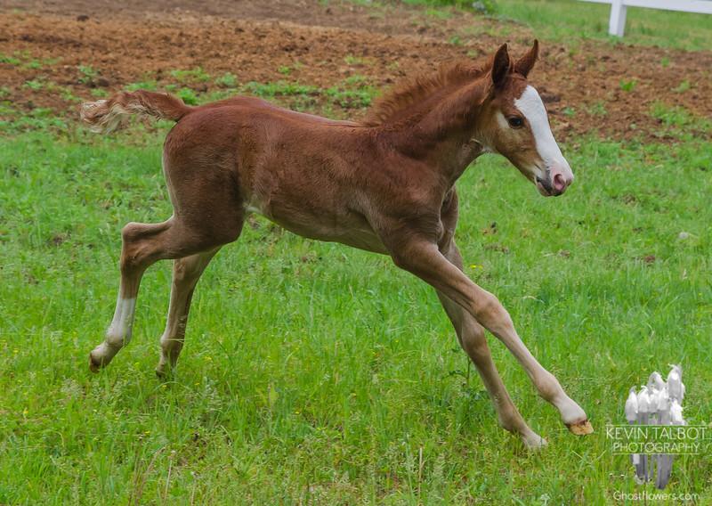 Foal… May 31, 2015.