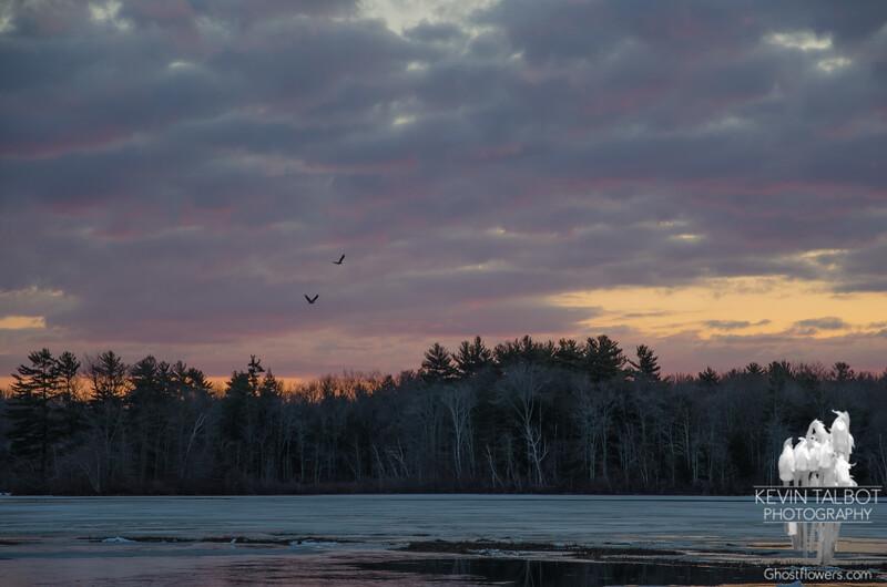 Dawn Flight-Eagles on the Powow… April 5, 2015.