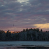 Dawn Flight-Eagles on the Powow… April 5, 2015.
