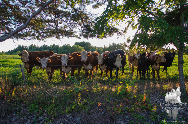 Friday night in Cow Hampshire… September 4, 2015.