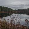 Cedar Swamp in Webster Wildlife Preserve Kingston, NH… December 1, 2015.