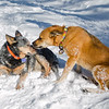 Warm kisses on a cold day… January 31, 2015.