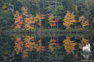 How beautiful the leaves grow old. How full of light and color are their last days. John Burroughs-Hatch Pond… October 12, 2015.
