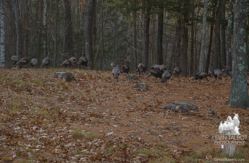 Today on the edge of the forest-Nobody's Dinner… November 26, 2015.