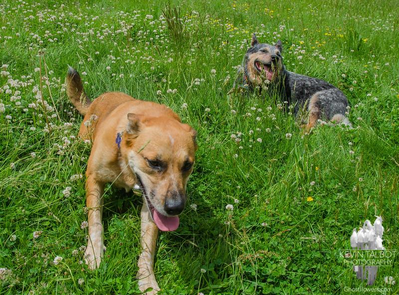 Dog days of June… June 6, 2015.