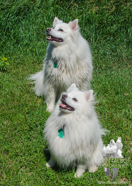 Bella Friday with big brother Blizzard… July 3, 2015.