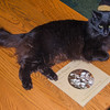 Marty, the summit cat at Mount Washington Observatory. He has excellent taste in books… March 15, 2015.