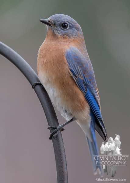 Don't fly Mr. Bluebird, I'm just walking down the road… November 14, 2015.