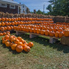 Pumpkins at Cider Hill Farm Amesbury, Massachusetts. Time to visit and support your local farm! September 21, 2015.
