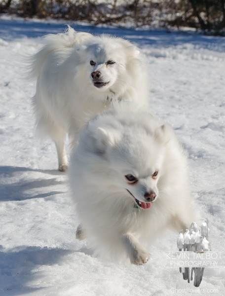 Bella & Blizzard today at the pahk… February 19, 2016.