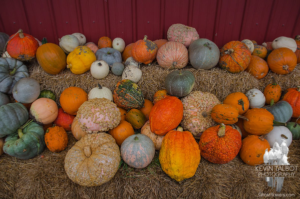 Not your run of the mill pumpkins... October 22, 2016.