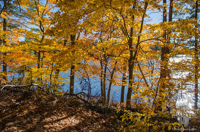 Golden afternoon at Great Pond-Kingston State Park... November 4, 2016.