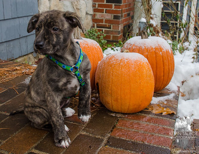 """Wicket contemplates """"Frost on the Pumpkin""""... December 12, 2106."""