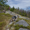 Hiking in the Belknaps today with Terra,,, May 14, 2016.