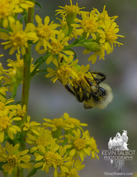 Bees were busy on the first full day of Autumn… September 23, 2016.