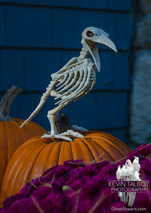 """Thus quoth the raven, """"Nevermore""""... October 23, 2016."""