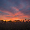 Red-wings croaking in the marsh at sunset- Fiery death to winter… February 28, 2016.