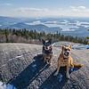 Koko & Blue today on Mount Morgan… January 14, 2016.