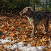 """Learning about sticks in """"Stick Season""""... December 9, 2016."""