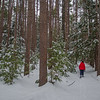 New snow and Red Pines today at Webster Wildlife Preserve in Kingston… February 10, 2016.
