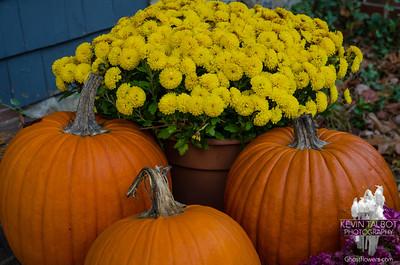 Still hanging in there- Pumpkins & Mums... November 21, 2016.