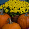 Still hanging in there- Pumpkins & Mums... November 21, 2016.