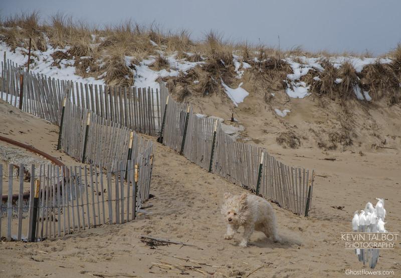 Pretty sure Cooper loves his beach runs… February 11, 2016.