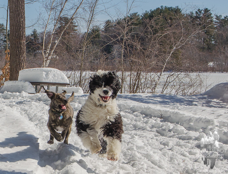 A Valentine's day romp at Kingston State Park with Wicket & Max... February 14, 2017.