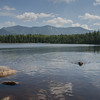 Swimming & fetching at Lonesome Lake... August 10, 2017.