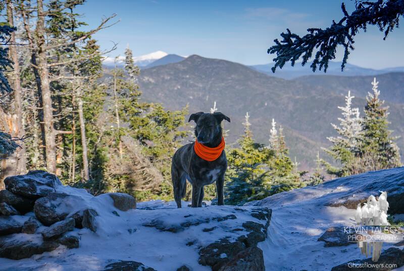 Zen moment today on Mount Tecumseh... November 21, 2017.
