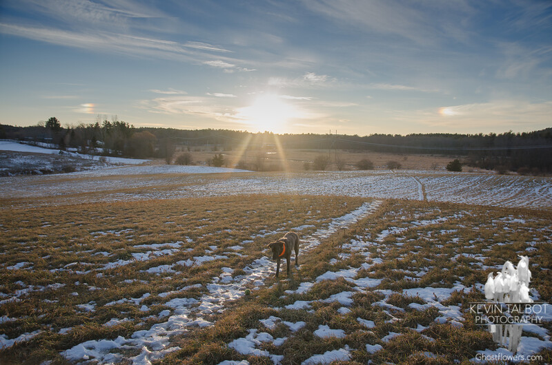 Solstice Sun Dogs today at Woodsom Farm... December 21, 2017.