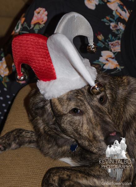 Santa's Little Helper... December 24, 2017.