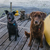 "Zorah, Wicket & Marley: ""Will Sit For Treats!"" September 10, 2017."
