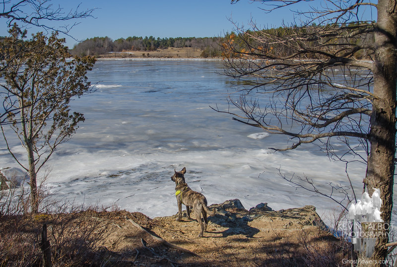 """""""Ears to the wind""""-The only thing that belies the arctic wind blowing across Great Bay is Wicket's floating ears... March 5, 2017."""