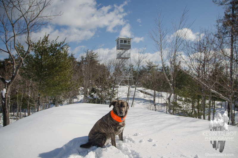 South Pawtuckaway this morning with Wicket... February 18, 2018.