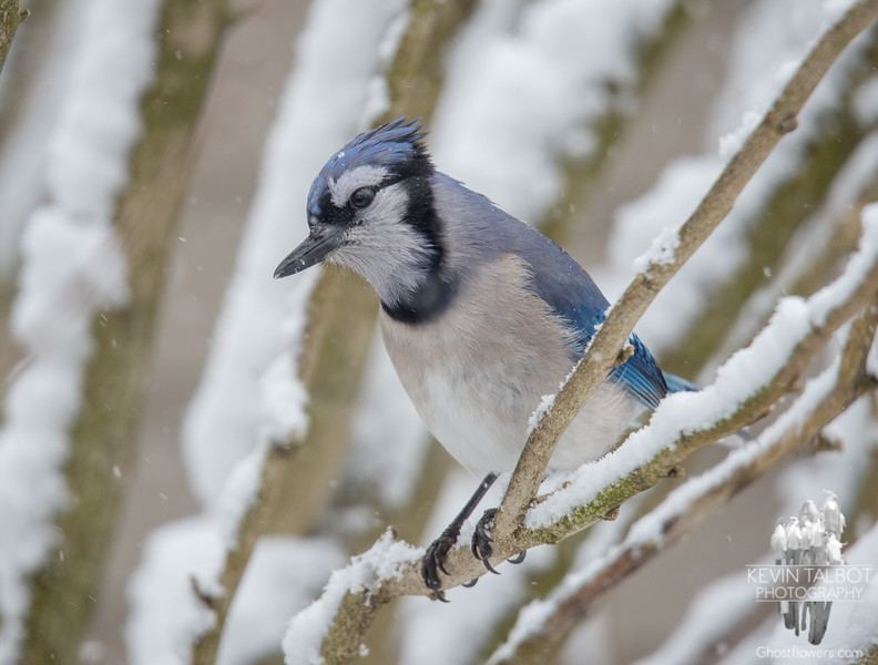 Young Jay in this morning's snow... March 22, 2018.