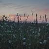 Dusk in a meadow... August 5, 2018.