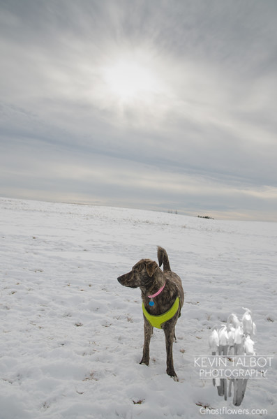 Winter walking with Wicket at Woodsom... January 20, 2018.