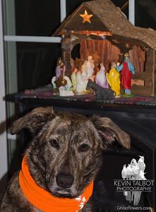 Guarding the manger... December 11, 2018.