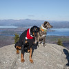 Wicket and her buddy Hank share a rock today on Mount Major... December 5, 2018.