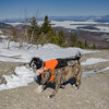 Perfect conditions- With intertwined tails Wicket and Max welcome  Spring to Mount Major... March 20, 2018.