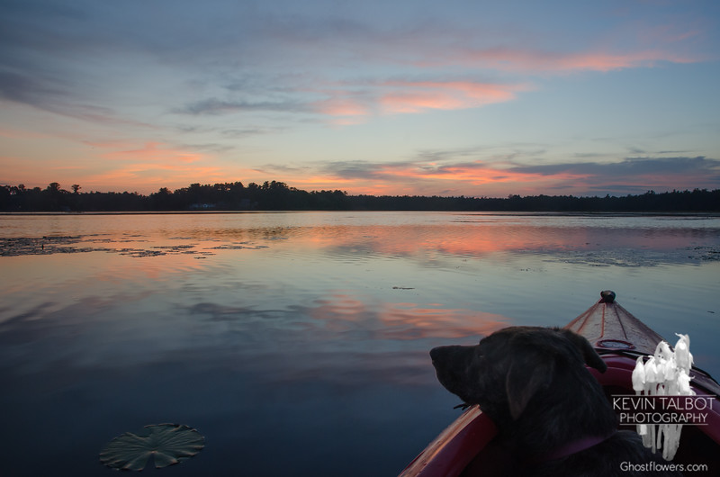 Last light on a sweet day full of friends and fun-Wicket fell asleep in the kayak watching the sun go down and sky light up... September 2, 2018.
